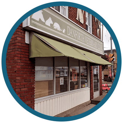 About The Danforth Veterinary Clinic In East York, Toronto