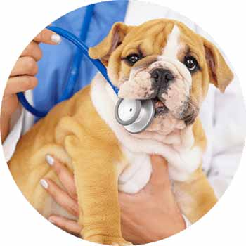 Vet Clinic Flea & Tick Treatment For Dogs In East York